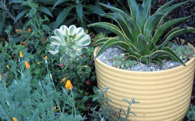 Bauer pot in meadow