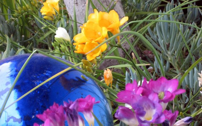 Mercury spheres amid freesia and senecio