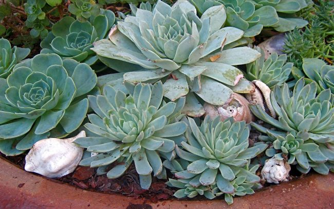 Canyon Family Playground: Potted succulent