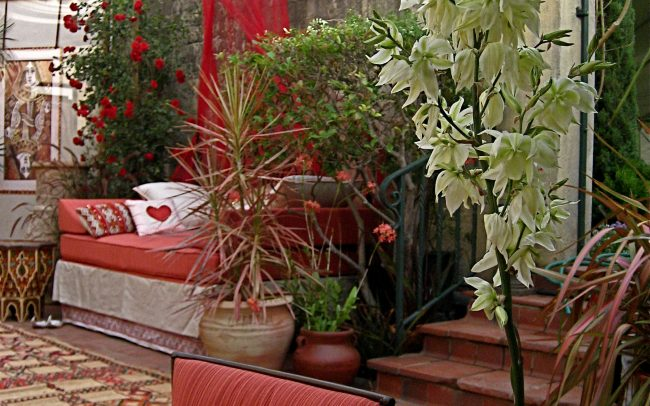 Terrace plantings