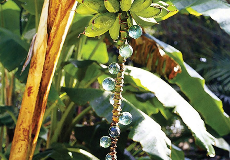 Jeweled banana stalks