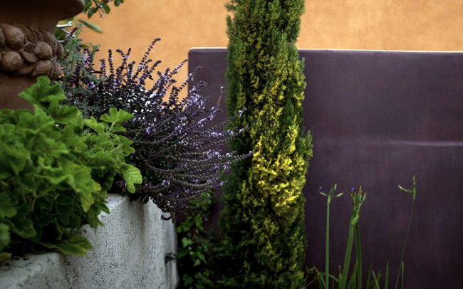 Master terrace with flowering plantings