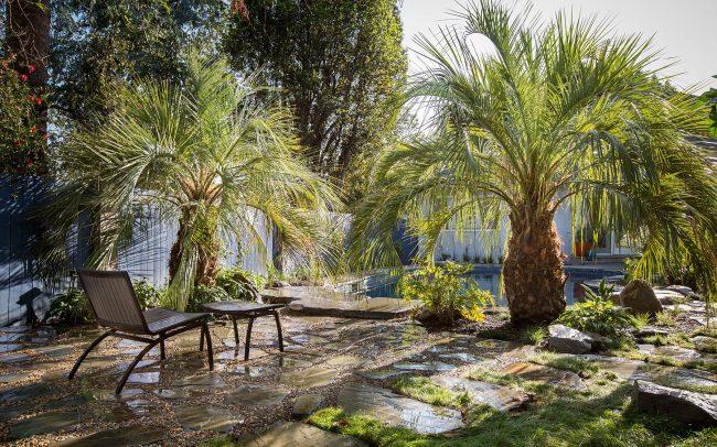 Butia palms and pool