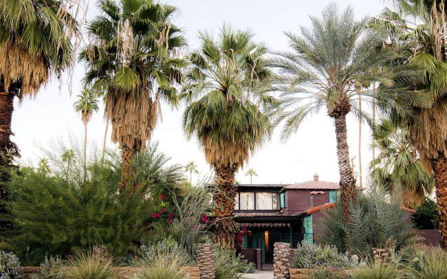 Raisin-colored house in lush desert oasis
