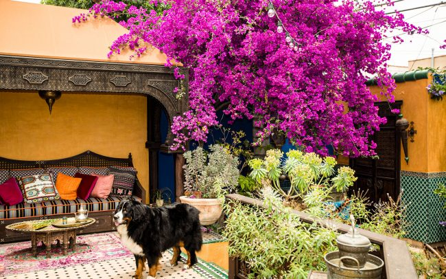 Backyard color and craftsmanship.